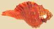 贝壳0040,贝壳,石头贝壳,