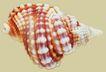 贝壳0042,贝壳,石头贝壳,