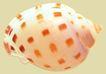 贝壳0046,贝壳,石头贝壳,