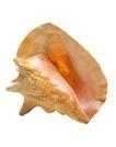 贝壳0063,贝壳,石头贝壳,