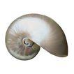 贝壳0066,贝壳,石头贝壳,