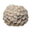 贝壳0076,贝壳,石头贝壳,