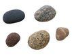 贝壳0079,贝壳,石头贝壳,