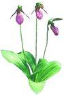 花草0910,花草,植物,