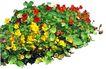 花草0911,花草,植物,