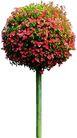 花草0915,花草,植物,