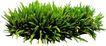 花草0918,花草,植物,