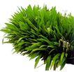 花草0919,花草,植物,