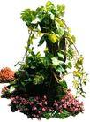 花草0920,花草,植物,