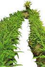 花草0921,花草,植物,