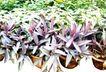 花草0924,花草,植物,