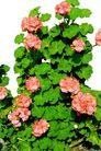 花草0928,花草,植物,