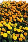花草0932,花草,植物,