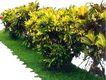 花草0939,花草,植物,
