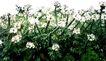 花草0945,花草,植物,