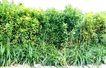 花草0946,花草,植物,