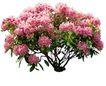 花草0949,花草,植物,