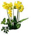 花草0950,花草,植物,