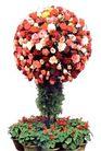 花草0958,花草,植物,