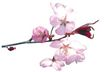 花草0960,花草,植物,