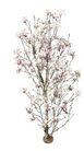 花草0961,花草,植物,