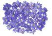 花草0963,花草,植物,