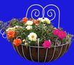 花坛0181,花坛,植物,