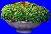 花坛0186,花坛,植物,
