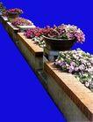 花坛0227,花坛,植物,