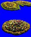 花坛0228,花坛,植物,