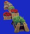花坛0229,花坛,植物,