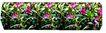 植皮草地0025,植皮草地,植物,