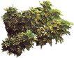 植皮草地0027,植皮草地,植物,