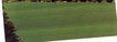 植皮草地0032,植皮草地,植物,