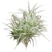 植皮草地0056,植皮草地,植物,