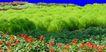 植皮草地0059,植皮草地,植物,