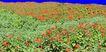 植皮草地0060,植皮草地,植物,