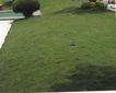 植皮草地0067,植皮草地,植物,