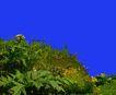 植皮草地0072,植皮草地,植物,