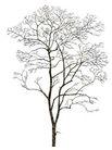 枯树0002,枯树,植物,