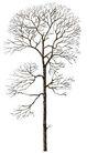 枯树0003,枯树,植物,