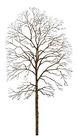 枯树0004,枯树,植物,