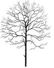 枯树0005,枯树,植物,