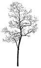 枯树0006,枯树,植物,