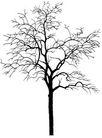 枯树0007,枯树,植物,