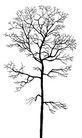 枯树0008,枯树,植物,