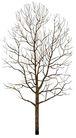 枯树0009,枯树,植物,