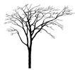 枯树0012,枯树,植物,