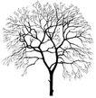 枯树0013,枯树,植物,