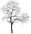 枯树0014,枯树,植物,